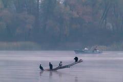Uccelli nella nebbia e nella pesca fotografia stock libera da diritti