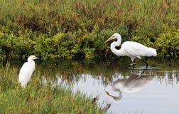 Uccelli nelle aree umide Fotografia Stock Libera da Diritti