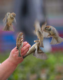 Uccelli pubblici Fotografie Stock Libere da Diritti