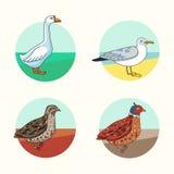 uccelli Quaglia di California Oca Gabbiano reale nordico Stile del fumetto Immagine Stock Libera da Diritti