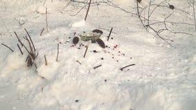 uccelli selvaggi d'alimentazione nell'inverno video d archivio