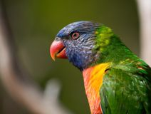 Uccelli selvaggi di colore Fotografie Stock Libere da Diritti
