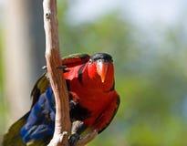 Uccelli selvaggi di colore Immagine Stock
