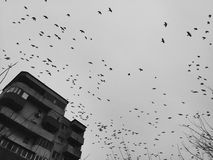 Uccelli sopra il cielo scuro Fotografie Stock