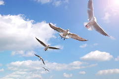 Uccelli su aria Fotografia Stock Libera da Diritti
