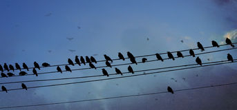 Uccelli su cavo Immagine Stock Libera da Diritti