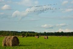 Uccelli su collegare 1 Fotografie Stock Libere da Diritti