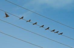 Uccelli su collegare Fotografie Stock Libere da Diritti