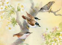 Uccelli su di melo sbocciante