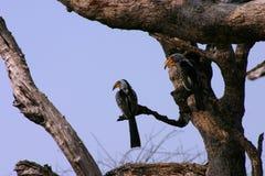 Uccelli su un albero Fotografia Stock Libera da Diritti