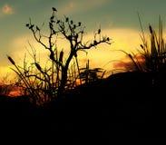 Uccelli su un albero con la priorità bassa 4 del cielo Fotografia Stock