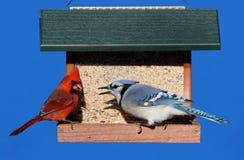 Uccelli su un alimentatore immagini stock libere da diritti