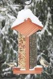 Uccelli su un alimentatore Fotografie Stock