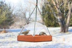 Uccelli su un alimentatore Fotografia Stock