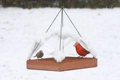 Uccelli su un alimentatore in neve Fotografia Stock