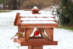 Uccelli su un alimentatore in neve immagini stock libere da diritti