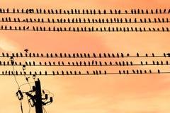 Uccelli su un cavo Fotografia Stock Libera da Diritti