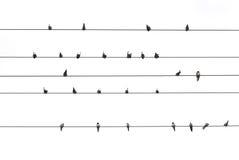 Uccelli su un collegare Fotografie Stock Libere da Diritti