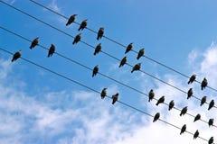 Uccelli su un collegare Fotografia Stock Libera da Diritti