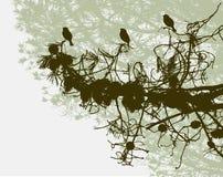 Uccelli su un ramo del pino Fotografie Stock Libere da Diritti