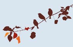 Uccelli su un ramo di albero in autunno Fotografie Stock Libere da Diritti