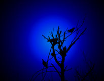 uccelli su una filiale Fotografia Stock Libera da Diritti