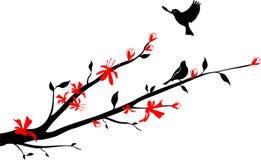 Uccelli su una filiale della ciliegia orientale Fotografia Stock Libera da Diritti