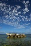 Uccelli su una roccia Immagini Stock Libere da Diritti