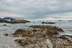 Uccelli su una roccia sulla riva dell'oceano Fotografia Stock