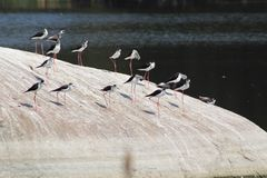 Uccelli su una superficie rocciosa Immagine Stock Libera da Diritti