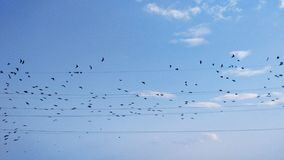 Uccelli sui cavi, uccelli di volo, uccelli in cielo Fotografia Stock