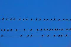 Uccelli sui collegare Fotografia Stock