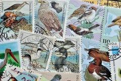 Uccelli sui francobolli Fotografia Stock