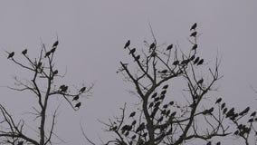 Uccelli sui rami di quercia, cielo nuvoloso di inverno, fine della macchina fotografica fissa treppiede su video d archivio