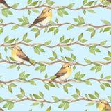 Uccelli sui rami Reticolo senza giunte blu Fotografie Stock Libere da Diritti