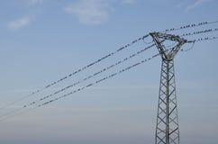Uccelli sul cavo di elettricità Fotografia Stock Libera da Diritti
