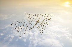 Uccelli sul cielo, concetto di sviluppo di crescita Fotografie Stock