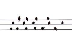 Uccelli sul collegare Fotografia Stock Libera da Diritti