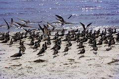 Uccelli sul litorale del golfo Fotografie Stock