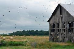 Uccelli sul vecchio campo del granaio immagini stock libere da diritti
