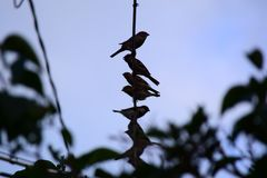 Uccelli sulla linea Immagine Stock Libera da Diritti