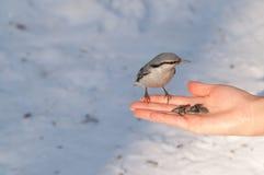 Uccelli sulla mano Fotografie Stock