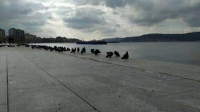Uccelli sulla riva e tramonto sopra i Dardanelli fotografia stock