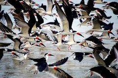 Uccelli sulla spiaggia Fotografie Stock