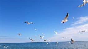 Uccelli sulla spiaggia stock footage
