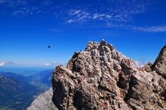 Uccelli sulle alpi Immagine Stock