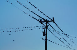 Uccelli sulle linee elettriche Fotografie Stock Libere da Diritti