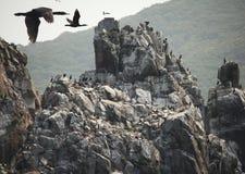 Uccelli sulle rocce Immagini Stock