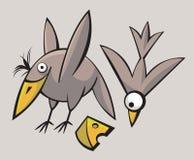 Uccelli svegli divertenti Fotografie Stock