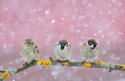 Uccelli svegli divertenti che si siedono sul ramo durante le precipitazioni nevose fotografia stock